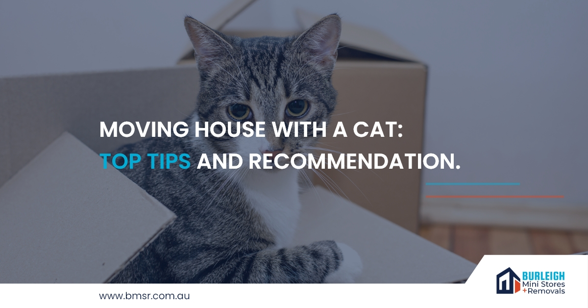 Moving House With A Cat: Top Tips and Recommendation.